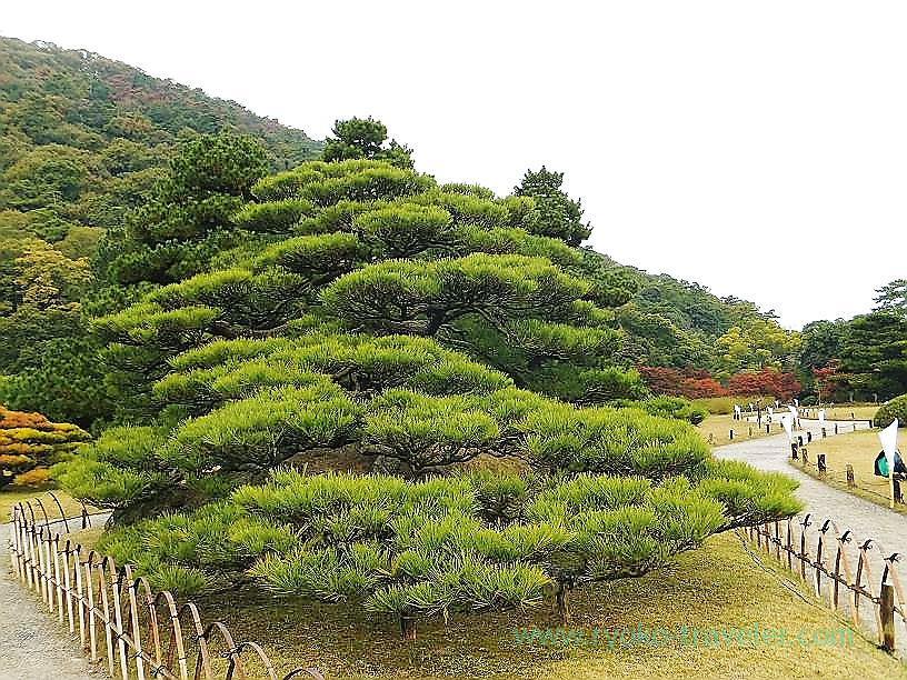 Ritsurin garden7, Ritsurin garden, Takamatsu (Kagawa & Tokushima 2011)