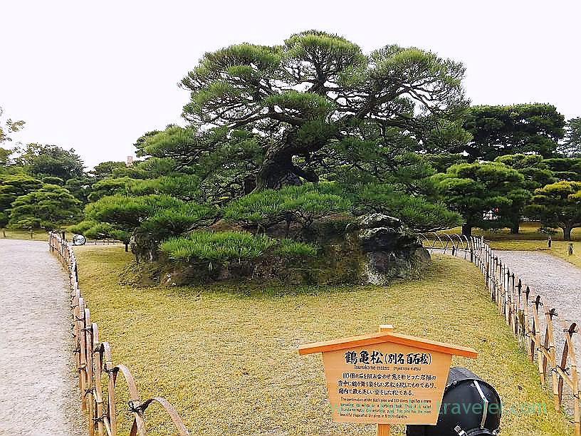 Tsurukamematsu, Ritsurin garden, Takamatsu (Kagawa & Tokushima 2011)