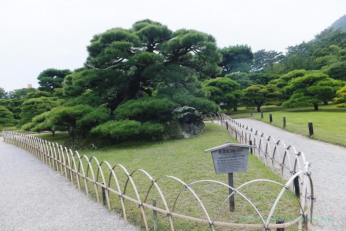 Tsurukamematsu, Ritsurin garden, Udon tour managed by Kotosan bus,(Takamatsu 2015)