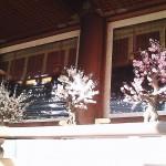 Kanda plum blossoms festival 2011