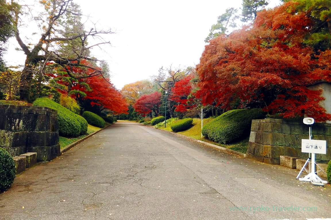 Autumn leaves 2, Opening of Inui street in Imperial palace to public 2015 Autumn