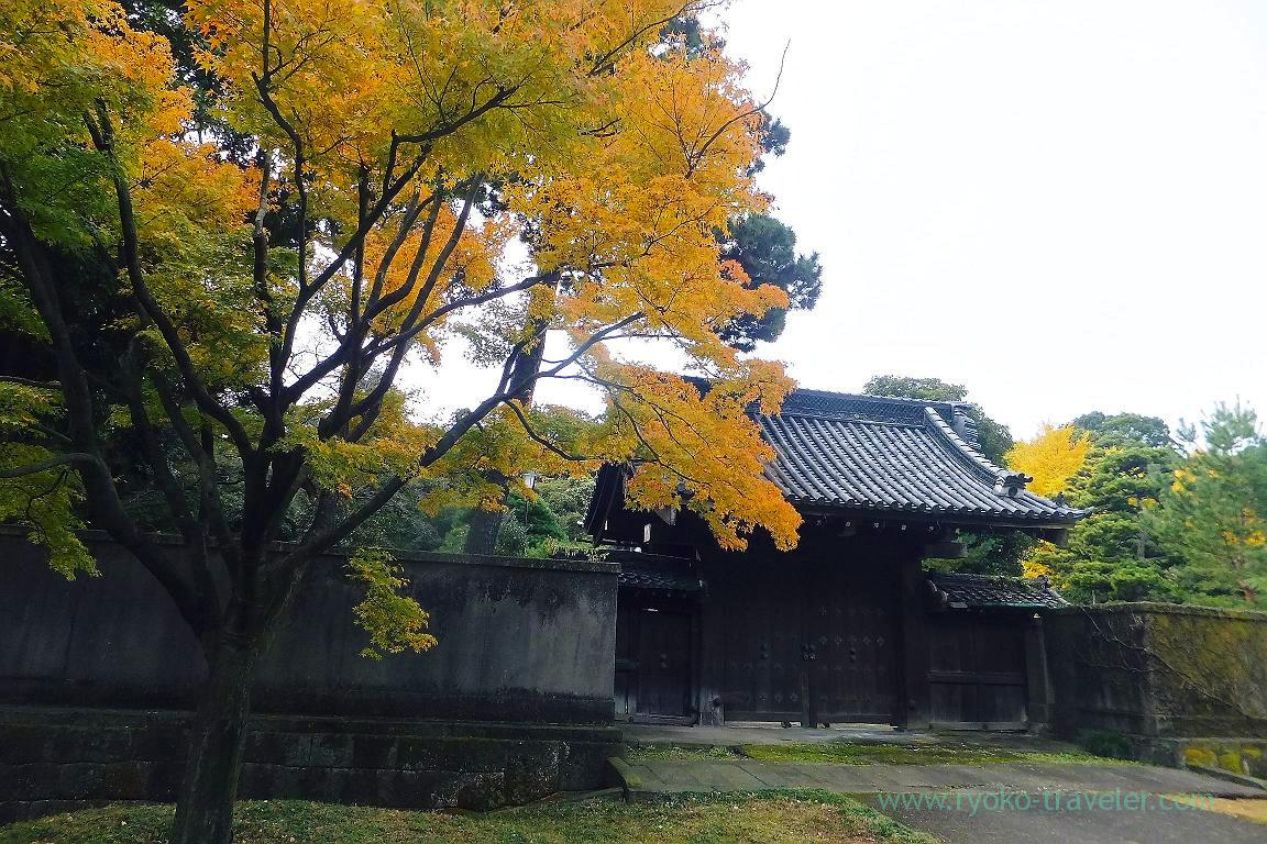 Autumn leaves 4, Opening of Inui street in Imperial palace to public 2015 Autumn