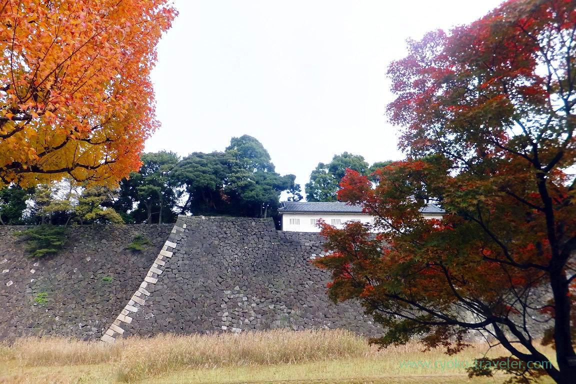 Autumn leaves 5, Opening of Inui street in Imperial palace to public 2015 Autumn