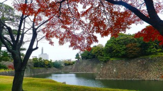 Inui street in Imperial palace to public 2015 autumn