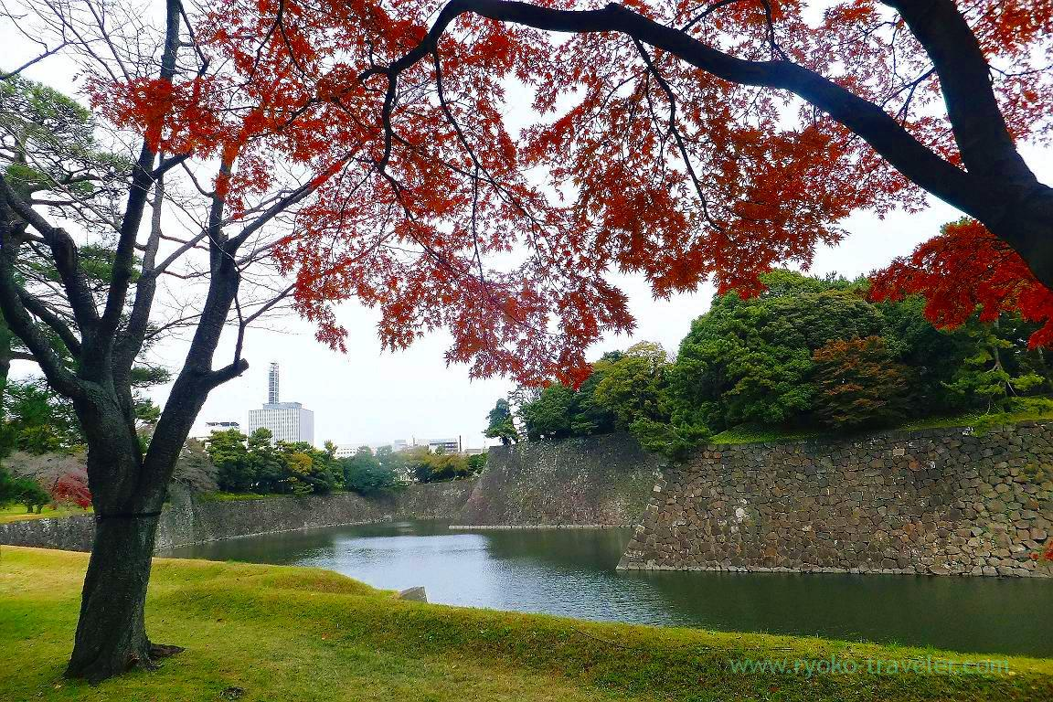Autumn leaves 7, Opening of Inui street in Imperial palace to public 2015 Autumn