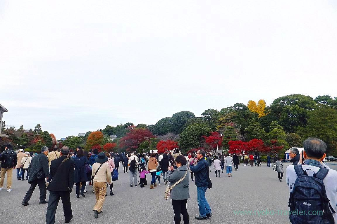 Autumn leaves, Opening of Inui street in Imperial palace to public 2015 Autumn