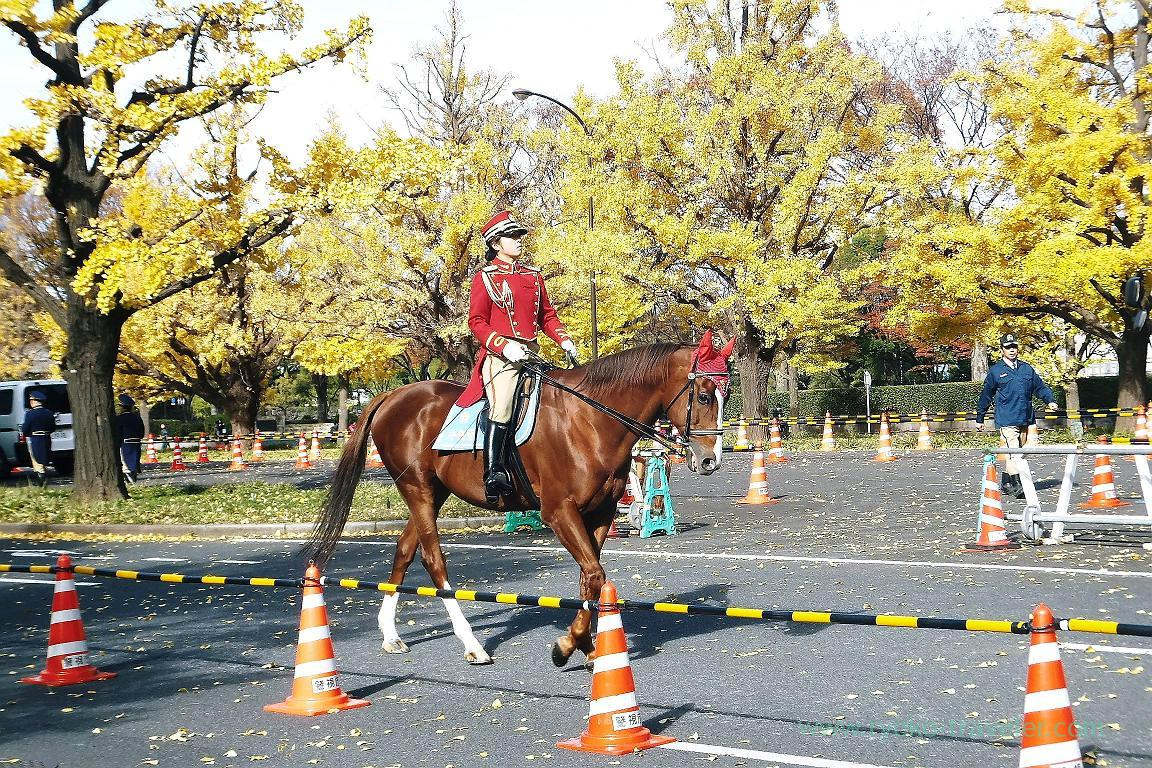 Horse, Opening of Inui street in Imperial palace to public 2015 Autumn