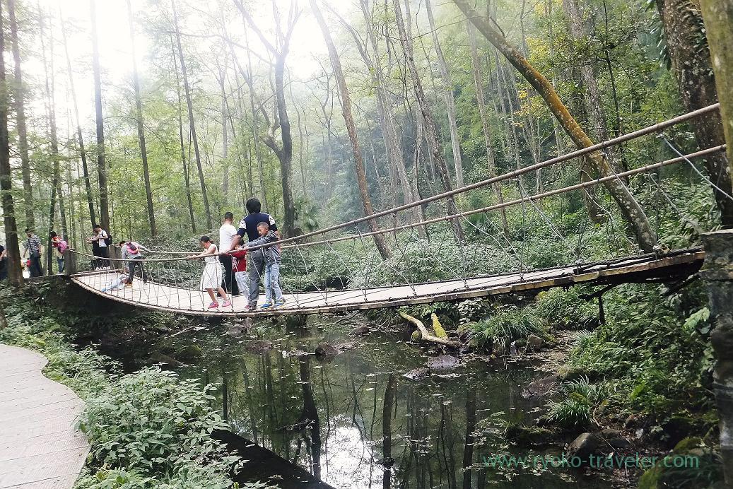View 3, Gold Whip Stream ,Zhangjiajie(Zhangjiajie and feng huang 2015)