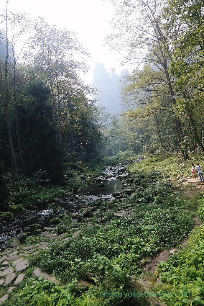 View 4, Gold Whip Stream ,Zhangjiajie(Zhangjiajie and feng huang 2015)