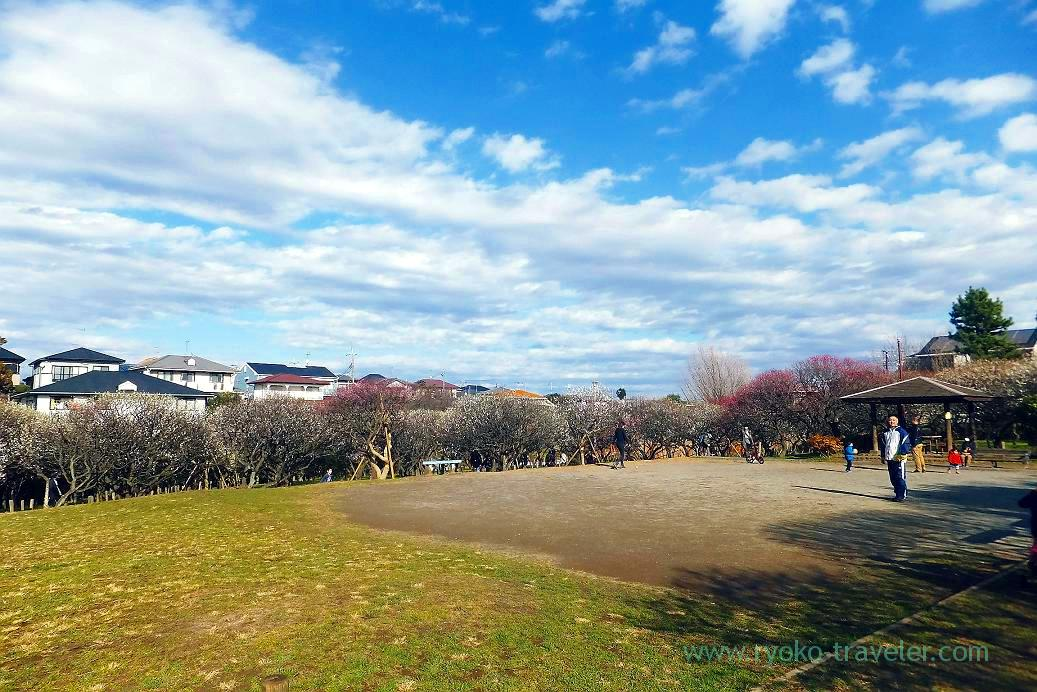 Whole park, Narashino Bairinen (Keisei Okubo)