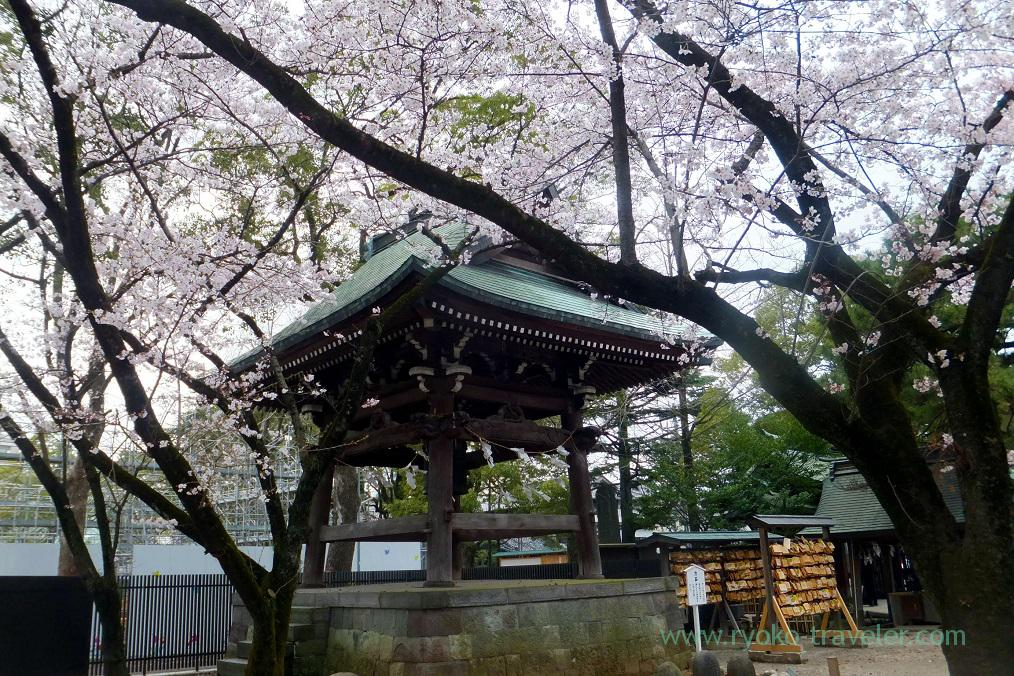 Cherry blossoms and bell tower, Katsushika Hachimangu shrine (Motoyawata)