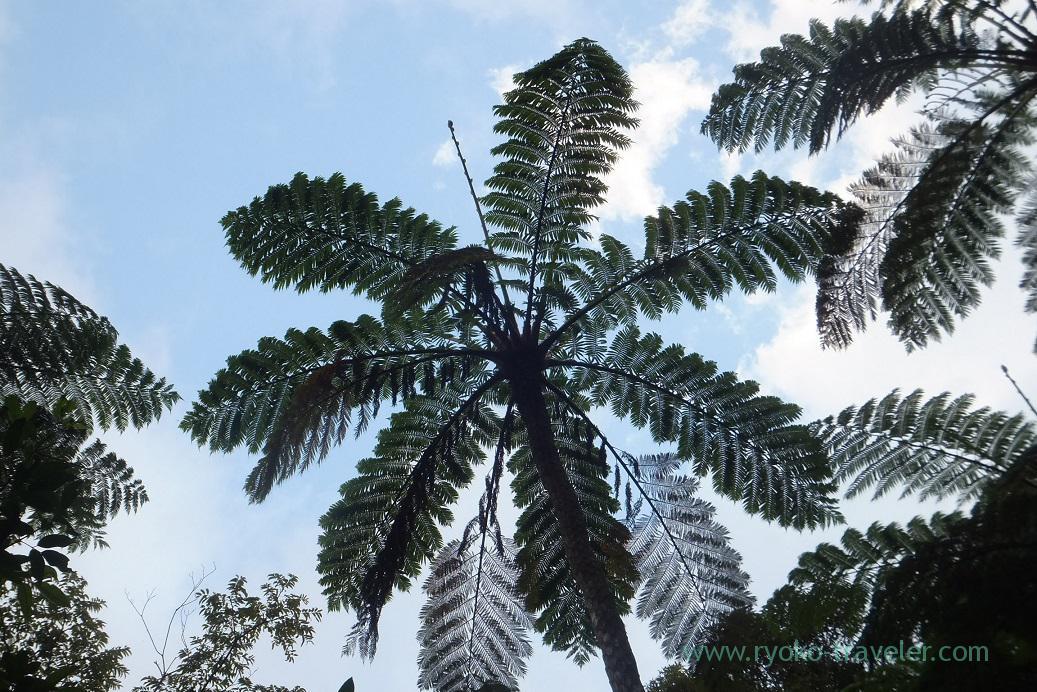 In the sky 1, Kinsakubaru Virgin Forest (Amami 2015)