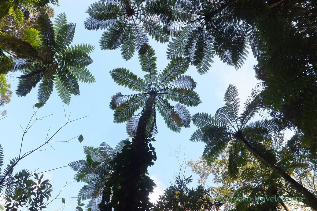 In the sky 2, Kinsakubaru Virgin Forest (Amami 2015)