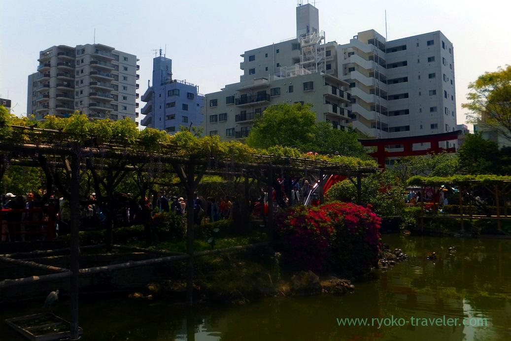 Packed with people, Kameido-ten Jinja shrine (Kameido)