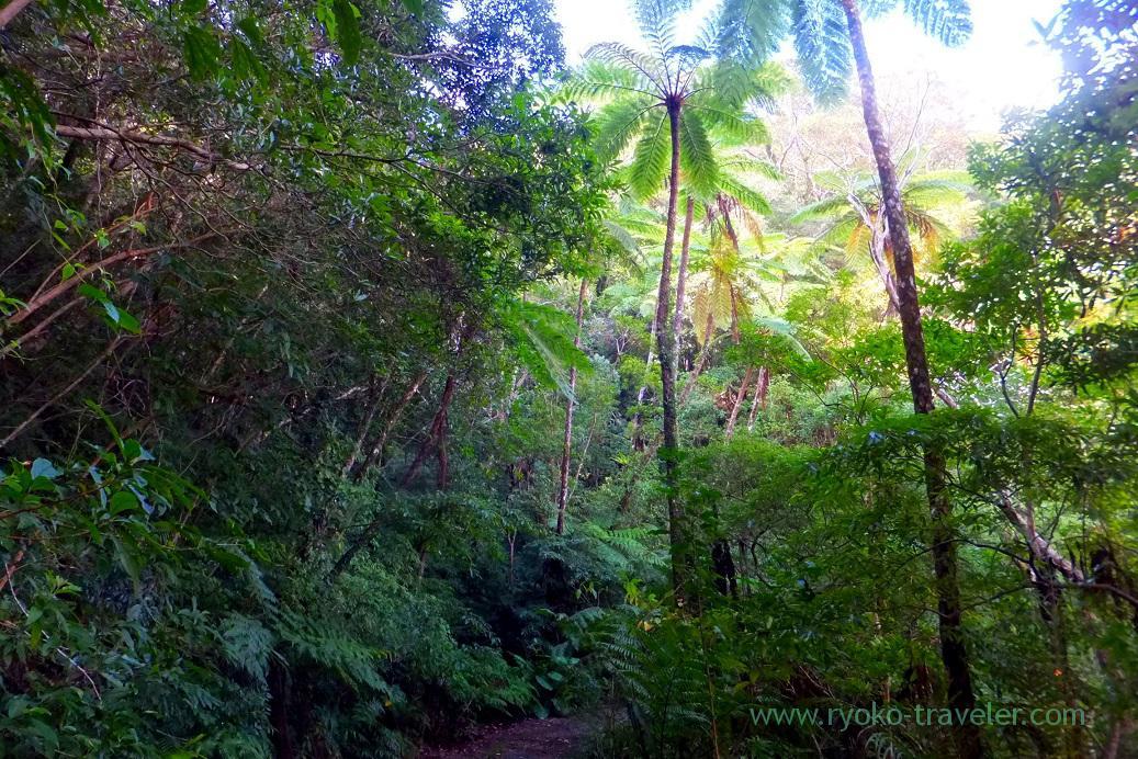 Road, Kinsakubaru Virgin Forest (Amami 2015)