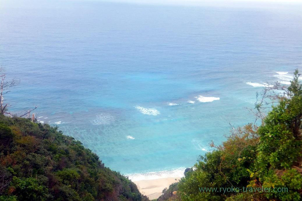 Sea on the way to forest, Kinsakubaru Virgin Forest (Amami 2015)