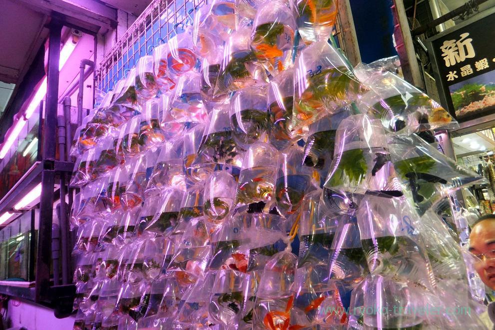 Goldfish 2, Goldfish market ,Mong kok (Hongkong 201602)