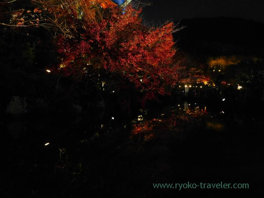 Autumn leaves reflection,Light-up Autumn leaves show, Kiyomizu temple (Kyoto)