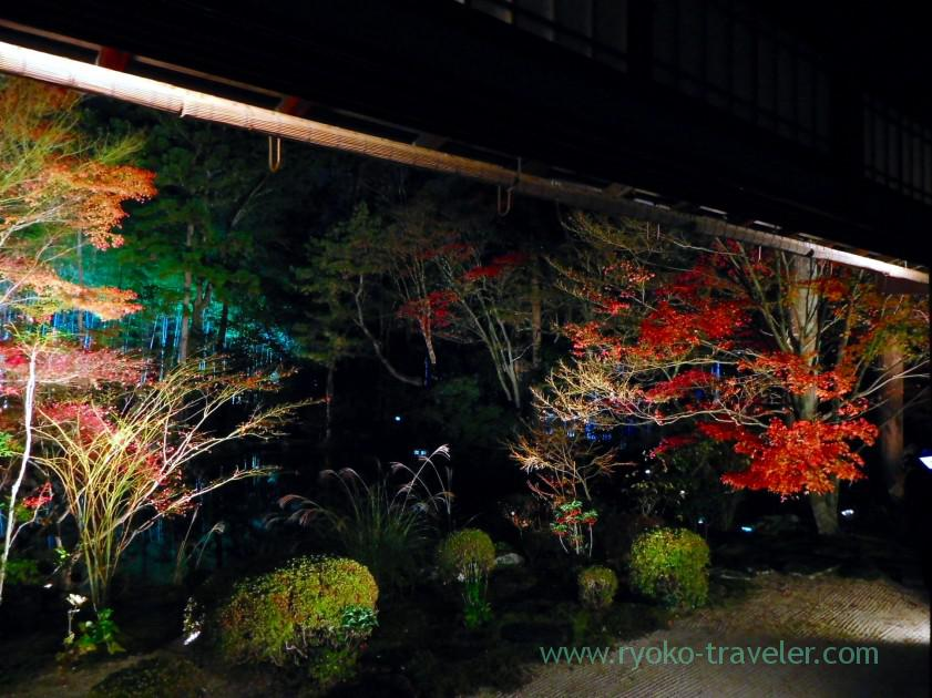 Lightup autumn garden2, Tenjyuan temple, Keage