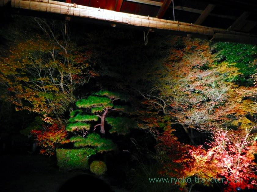 lightup-autumn-garden3-tenjyuan-temple-keage