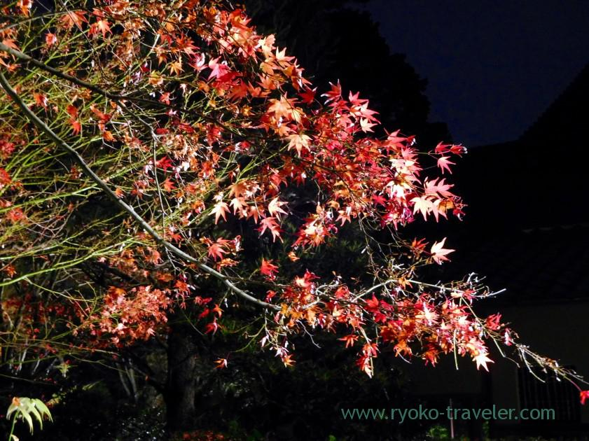lightup-autumn-garden5-tenjyuan-temple-keage