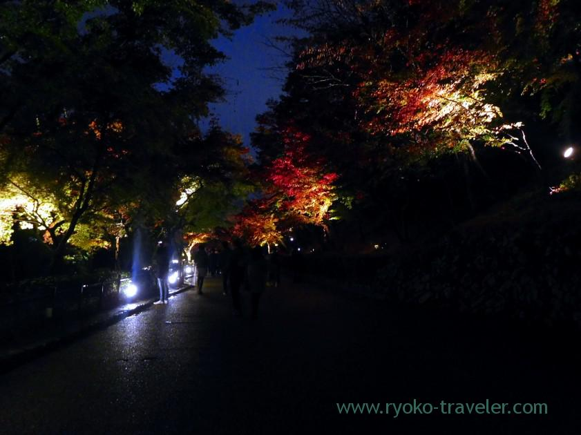 street-light-up-autumn-leaves-show-kiyomizu-temple-kyoto