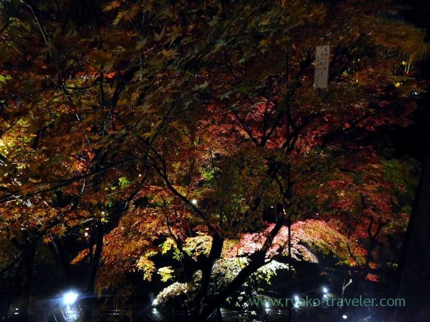 view-of-autumn-leaveslight-up-autumn-leaves-show-kiyomizu-temple-kyoto