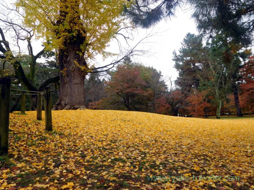 Yellow world, Kyoto Imperial garden (Marutamachi)