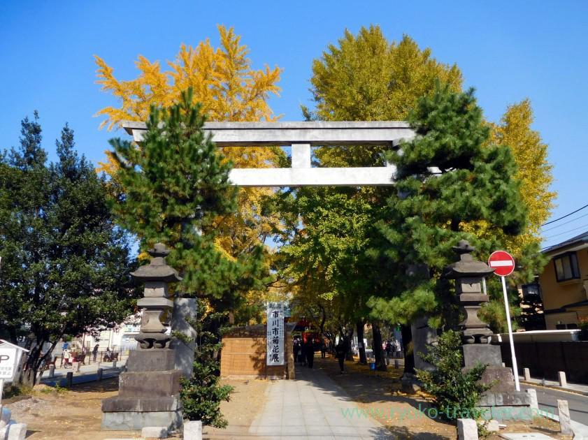 Torii, Katsushika Hachimangu shrine (Motoyawata)