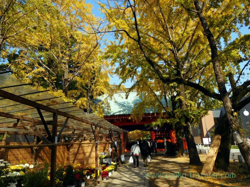 Yellow world, Katsushika Hachimangu shrine (Motoyawata)