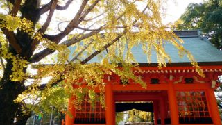 Motoyawata : Gingko trees are now their best in Katsushika Hachimangu shrine.